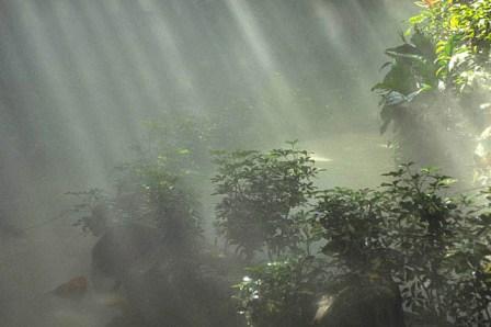 環境を守るために環境権の確立と環境基本法の熟知を